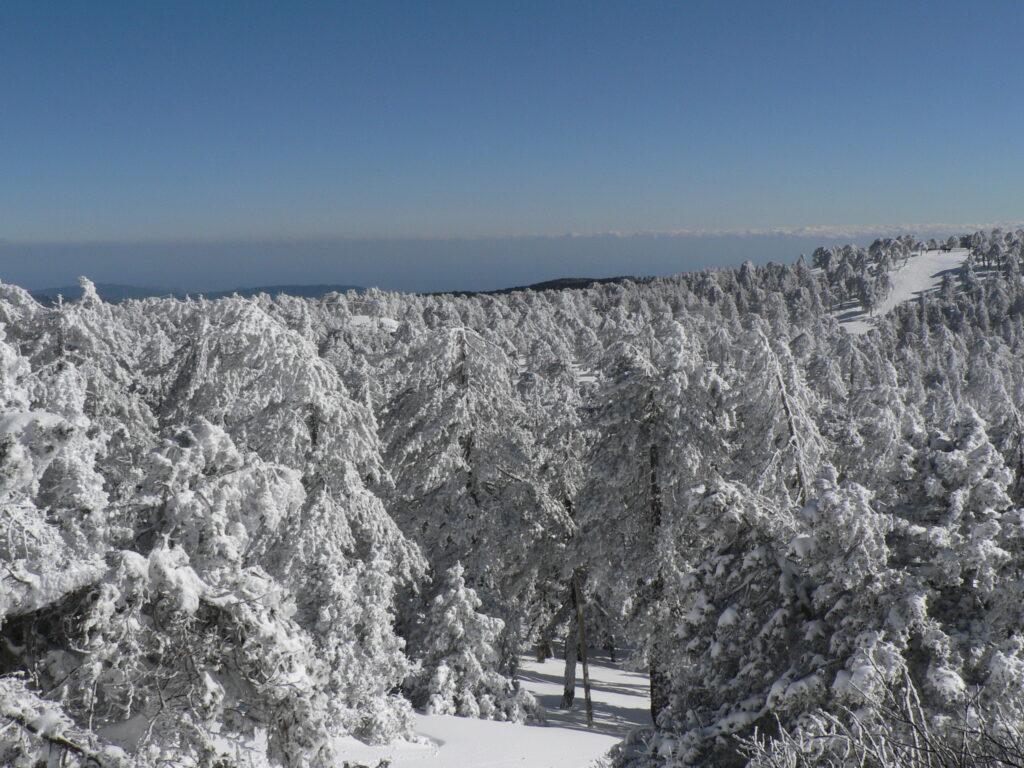 Troodos-Gebirge auf Zypern im Winter mit viel Schnee